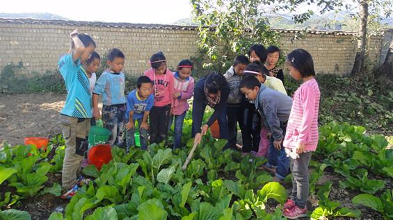 2013年11月27日勐连小学三年级的同学在老师的带领下到菜园里给青菜松土。这是学生第一次使用小锄头给菜地松土,他们充满了期待。老师先给他们示范,学生兴致勃勃地围在老师身边,仔细地听老师讲解,生怕遗漏了哪个环节。听完老师的讲解,学生们跃跃欲试,都想亲自动手试试。老师手把手地教他们使用小锄头给青菜除草,还不忘提醒他们注意安全。