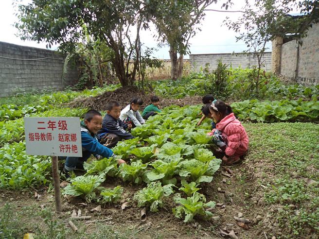 勐连小学二年级的学生在除草
